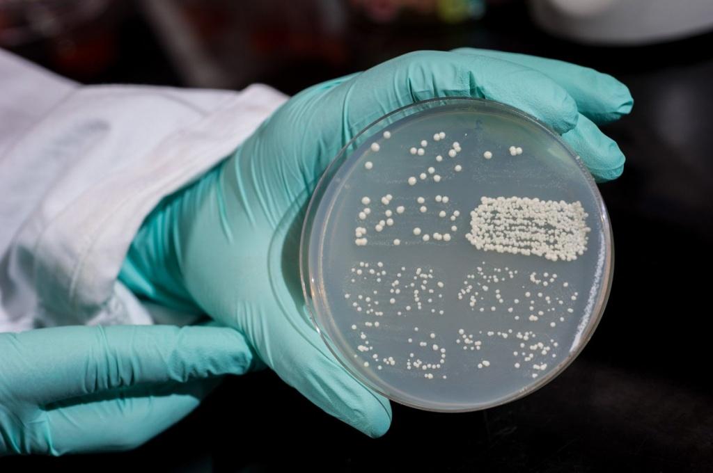 бактерии кандидоз.jpg